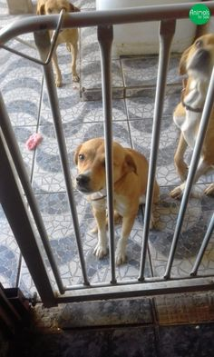 Mil anúncios cães procuro 17401
